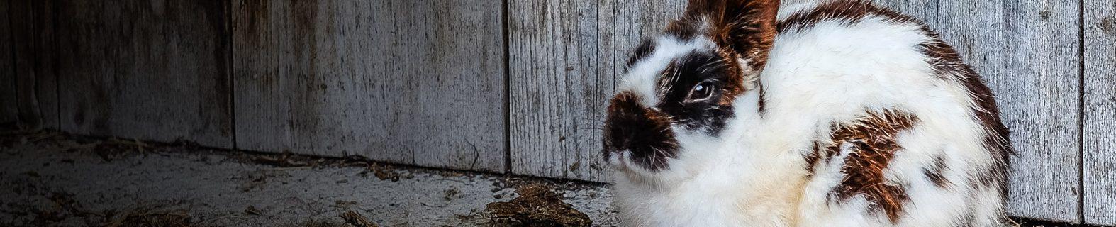 https://hvovet.com/hvo/wp-content/uploads/2016/09/veterinaire-lapin-ormstown-2-1574x320.jpg